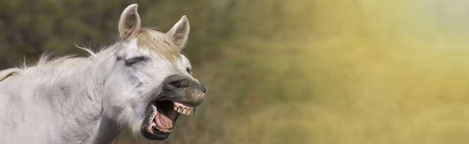 Zähne aufhellen mit Hausmitteln